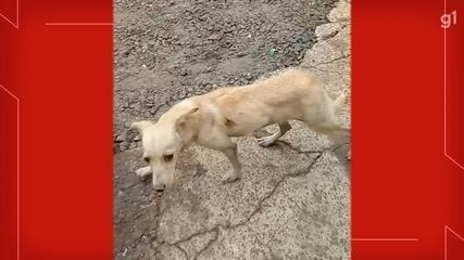Cadelinha foi adotada à beira da morte e levada para oficina de tutor