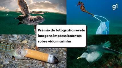 Máscaras e cigarro no mar: prêmio de fotografia mostra impacto da poluição nos animais