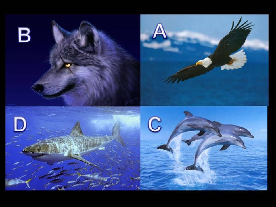 Mais Voce Aguia Golfinho Lobo Ou Tubarao Faca O Teste E