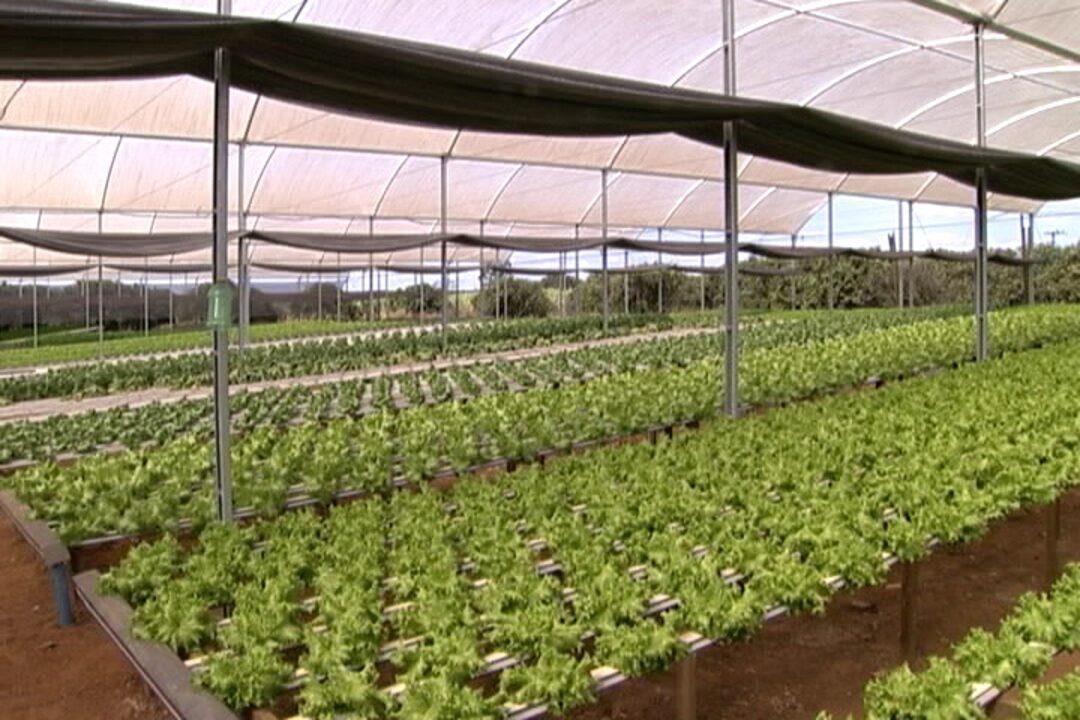 Globo rural especialista d orienta es sobre estufa de hortali as globoplay - Estufa para habitacion pequena ...