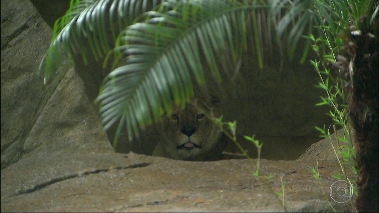 Zoológico do Rio reabre nesta sexta-feira (16), após onze meses fechado