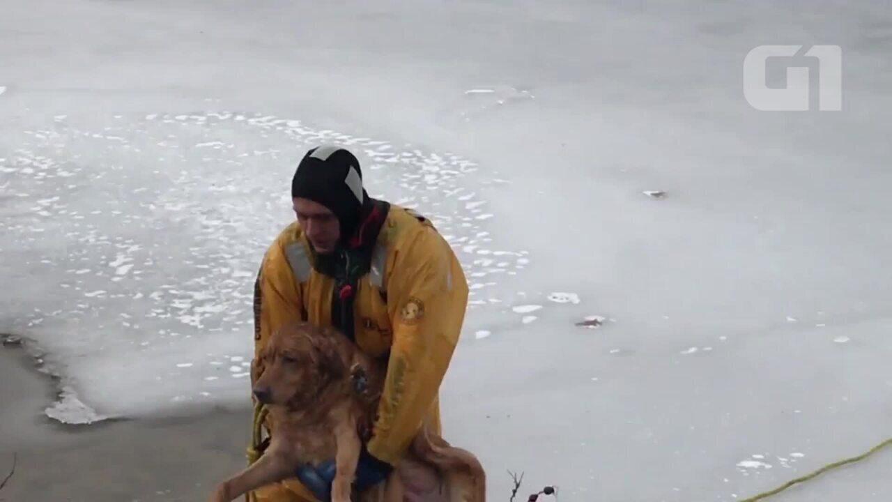 Cão é resgatado de lago congelado nos EUA
