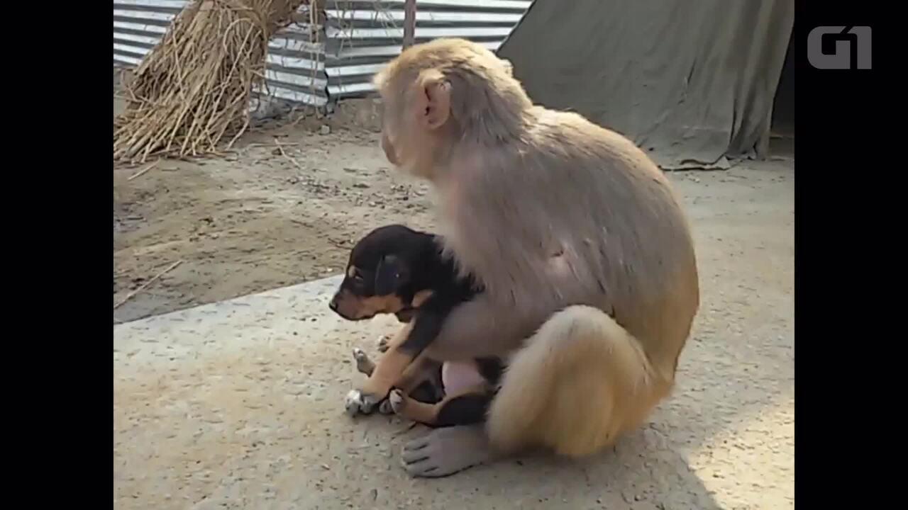Macaco adota filhote de cachorro na Índia