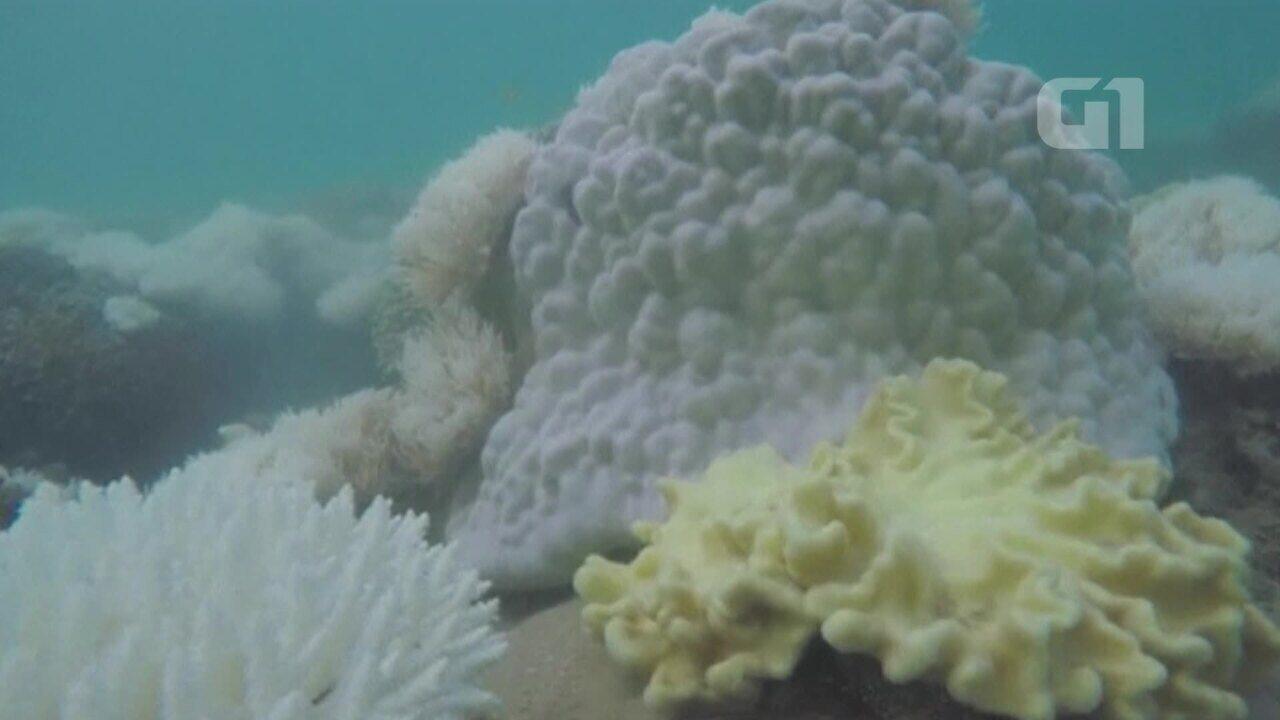 Corais da Grande Barreira da Austrália voltam a branquear