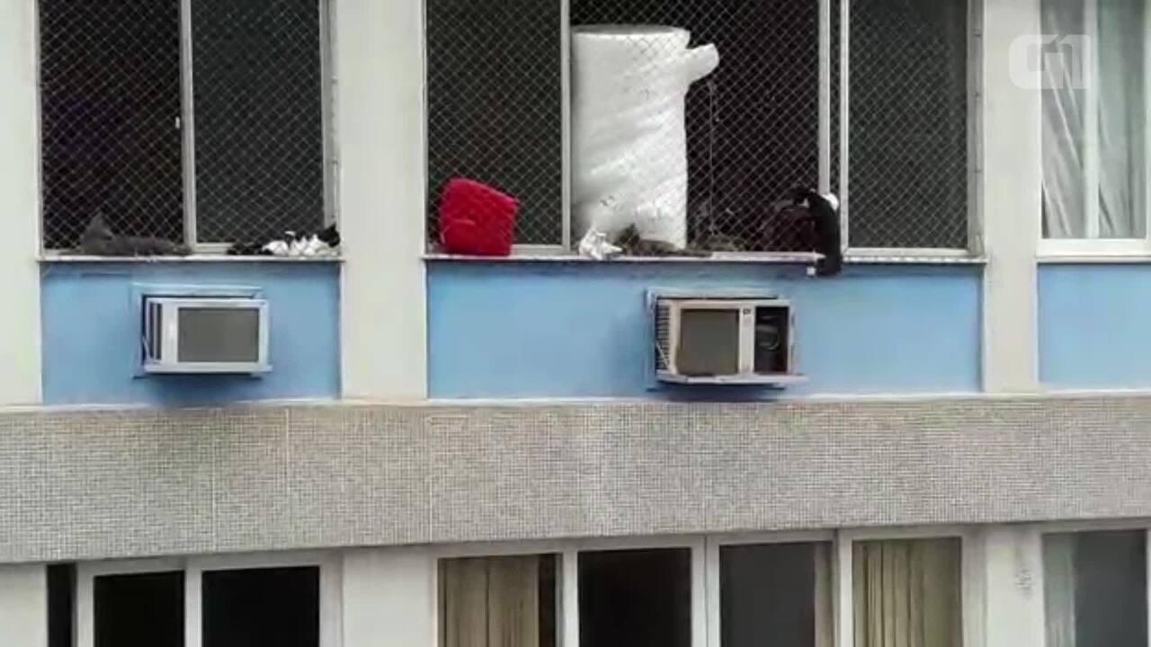 Vídeo mostra queda de gato em prédio de Vila Isabel