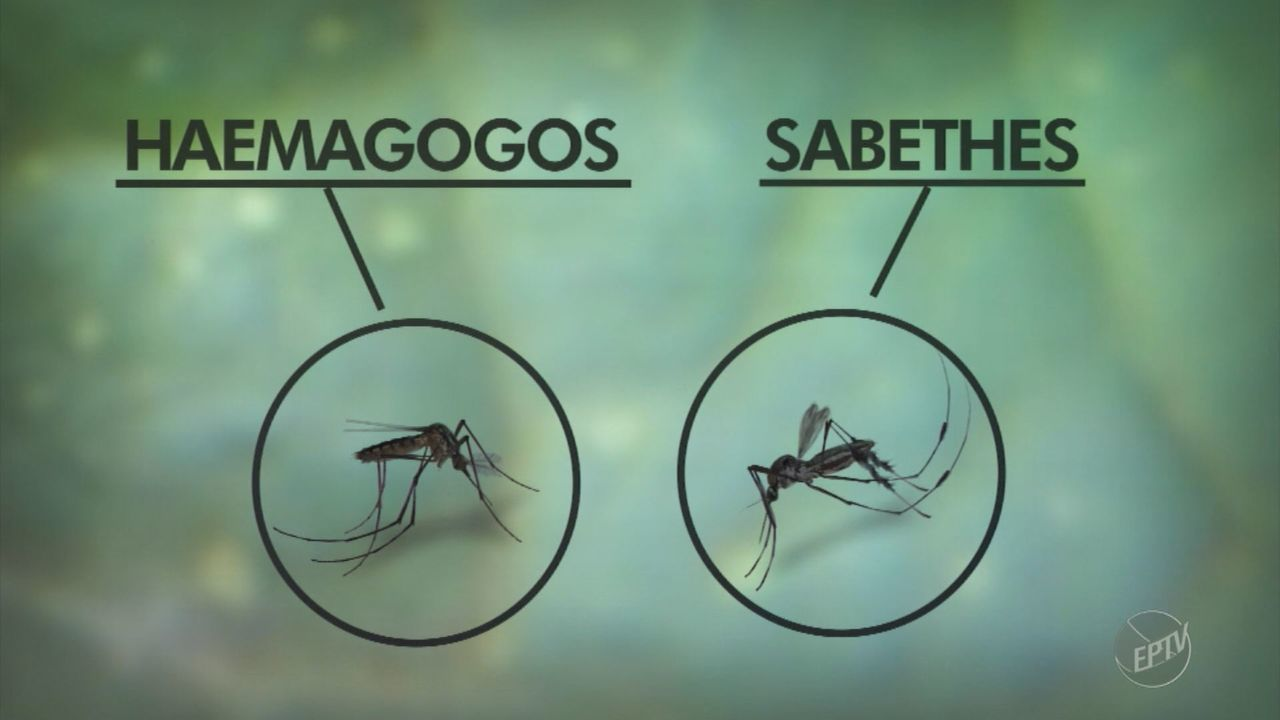 Primeiro caso de febre amarela contraída na região de Campinas é confirmada