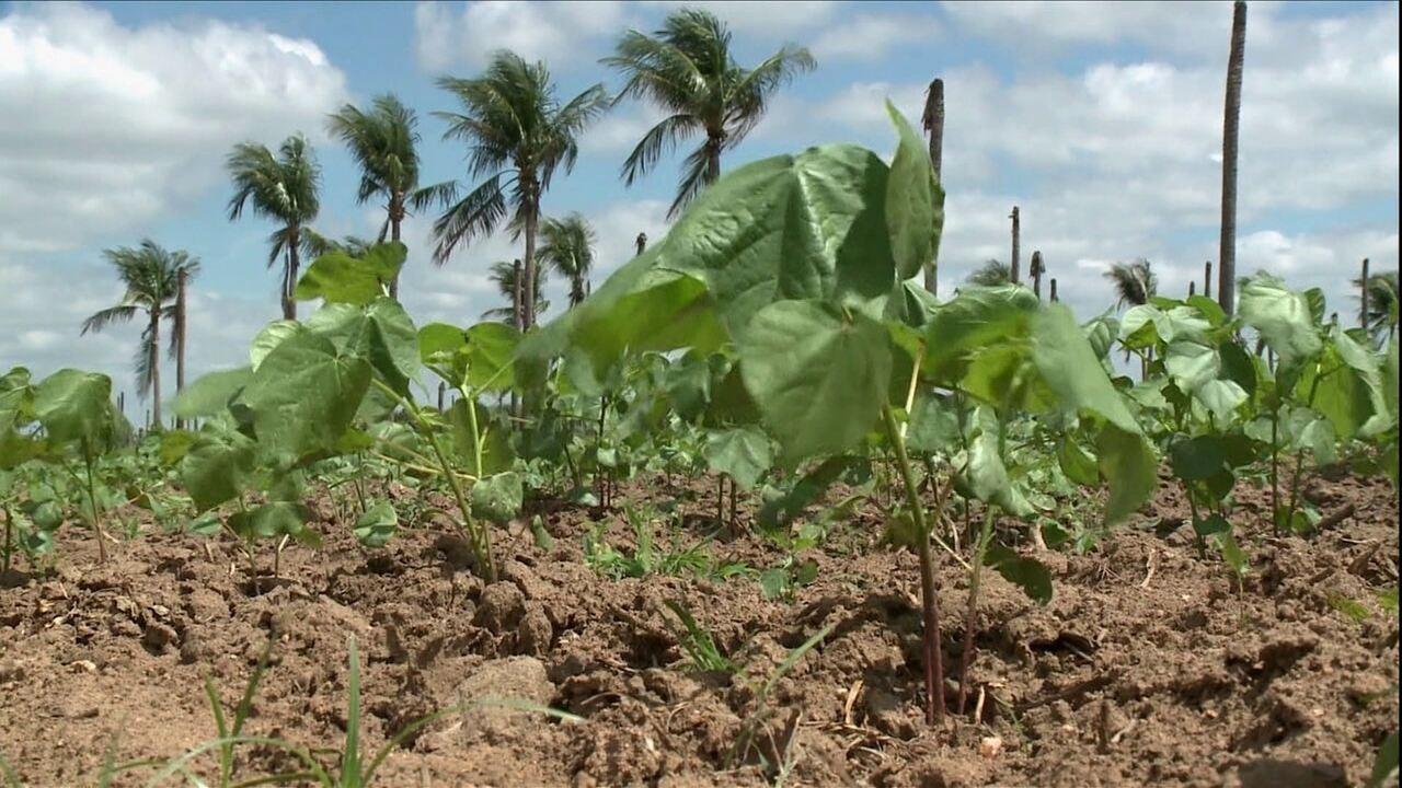 Localizado no sertão da Paraíba, Sousa já foi o maior produtor de coco do estado