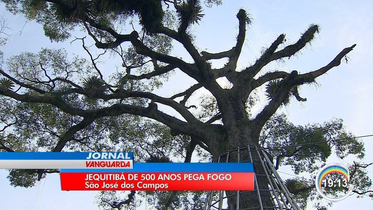 Jequitibá centenário pegou fogo em São José