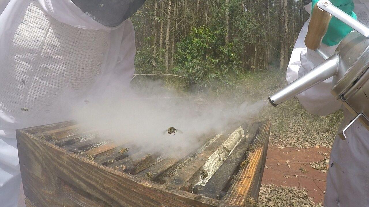 Mapeamento de eucaliptos ajuda apicultores a aumentar produção de mel