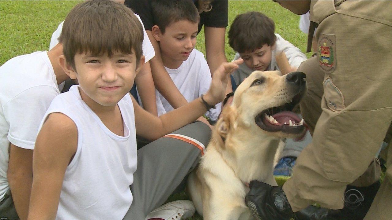 Cães policiais auxiliam no tratamento de crianças autistas no Sul de SC