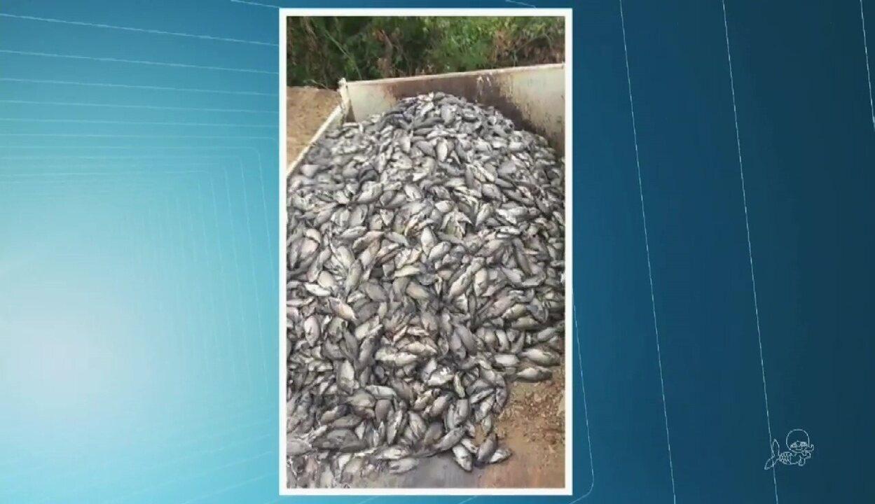 50 toneladas de peixes mortos são retiradas de açude em Lavras da Mangabeira