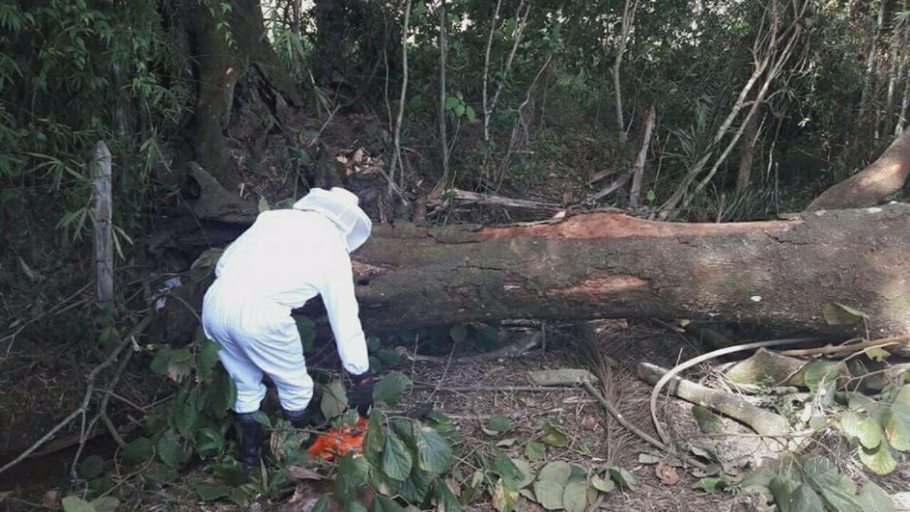 Homem de 35 anos morre após ser atingido por árvore em distrito de Conceição do Rio Verde