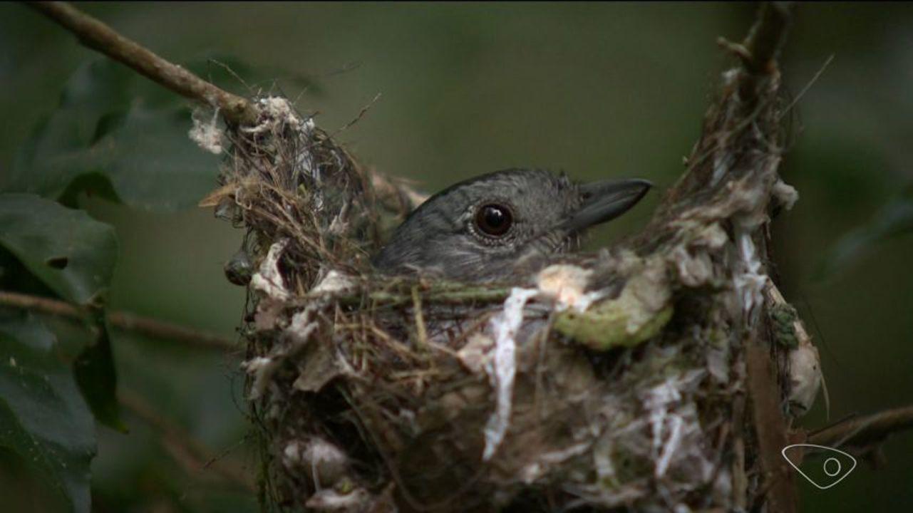 Fotógrafos capturam imagens inéditas de animais na Reserva Biológica de Sooretama