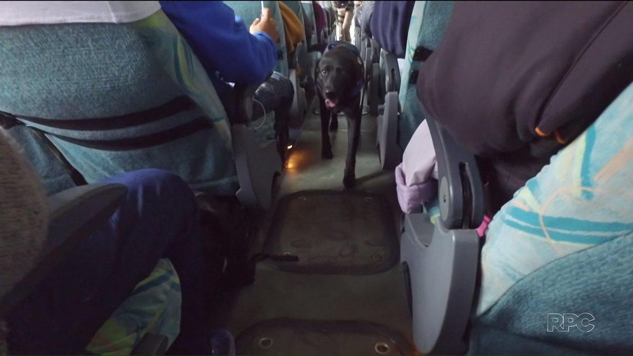 Despedida De Um Cão: Cão Farejador Da PRF Se Aposenta Com Direito A Festa De