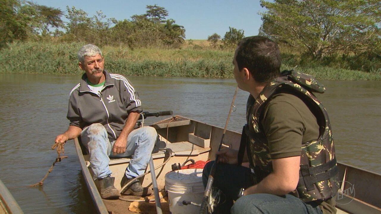 Resultado de imagem para Dupla de pescadores fisga pintado de 60 quilos no Rio Pardo em Barretos, SP