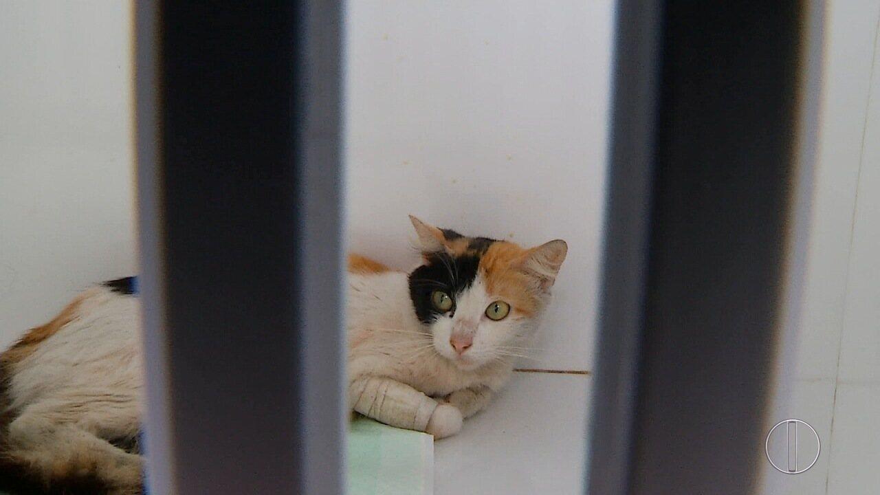 Número de envenenamento em cães e gatos de Cabo Frio, RJ, é intenso