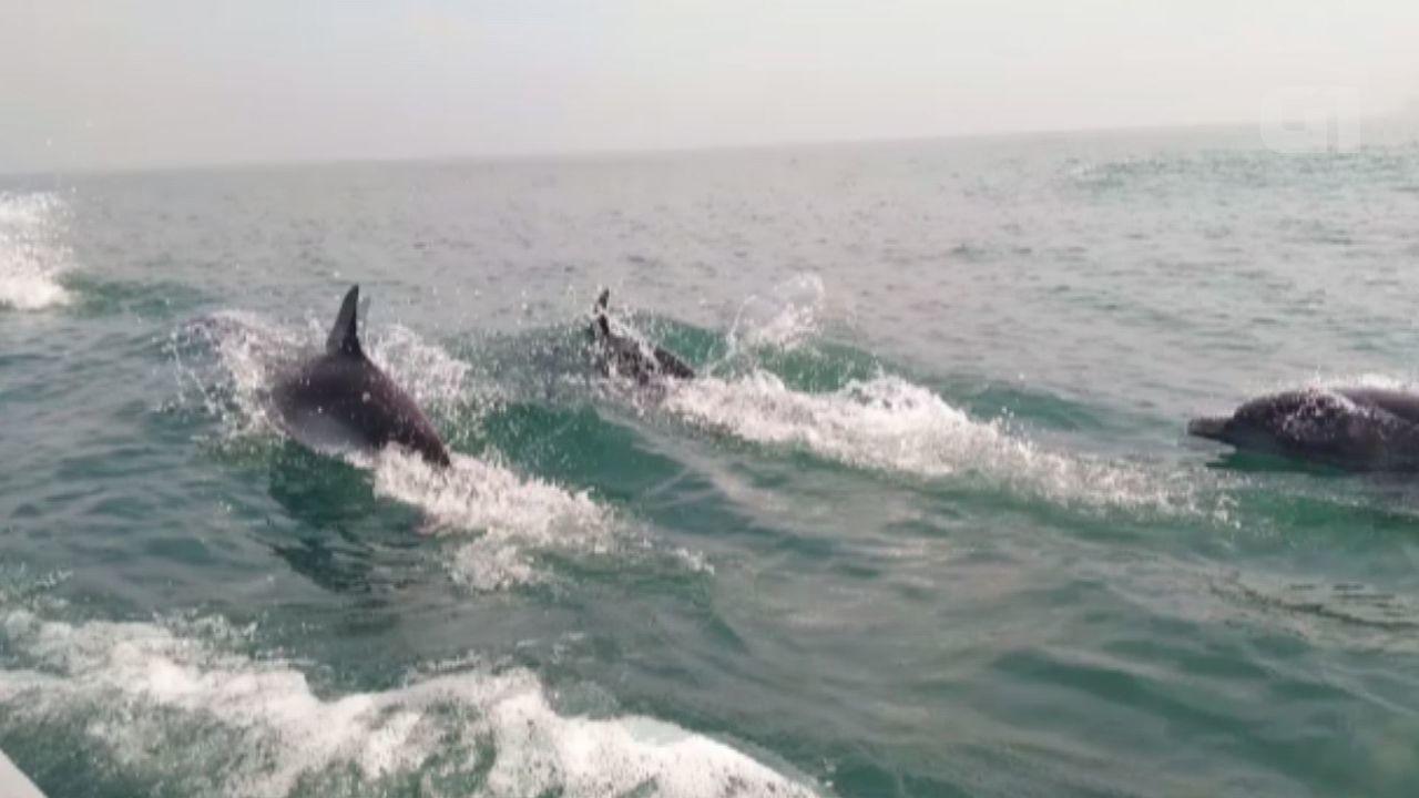 Pescador flagra bando de golfinhos na costa de Bertioga, SP