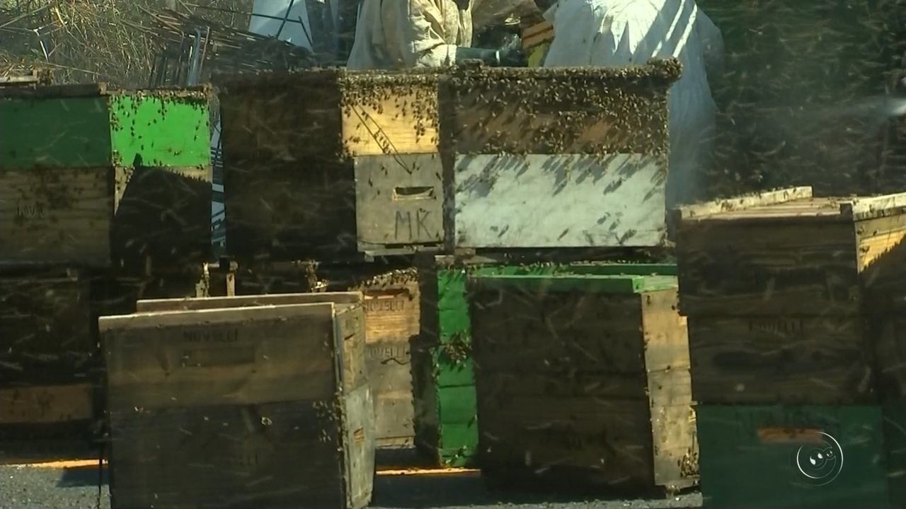 Família morre após acidente entre carro com caminhão carregado com abelhas