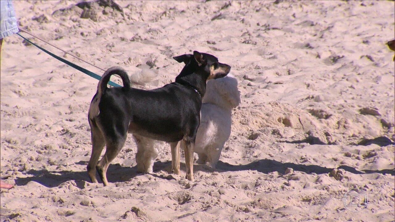 Cariocas não respeitam lei que proíbe passeio de cachorro nas areias do Rio