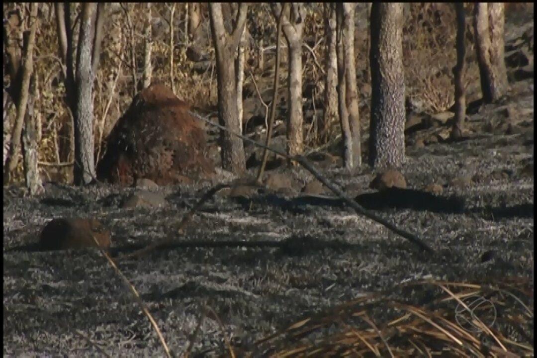 Exército e Bombeiros combatem incêndio no Parque Estadual do Pau Furado em Uberlândia
