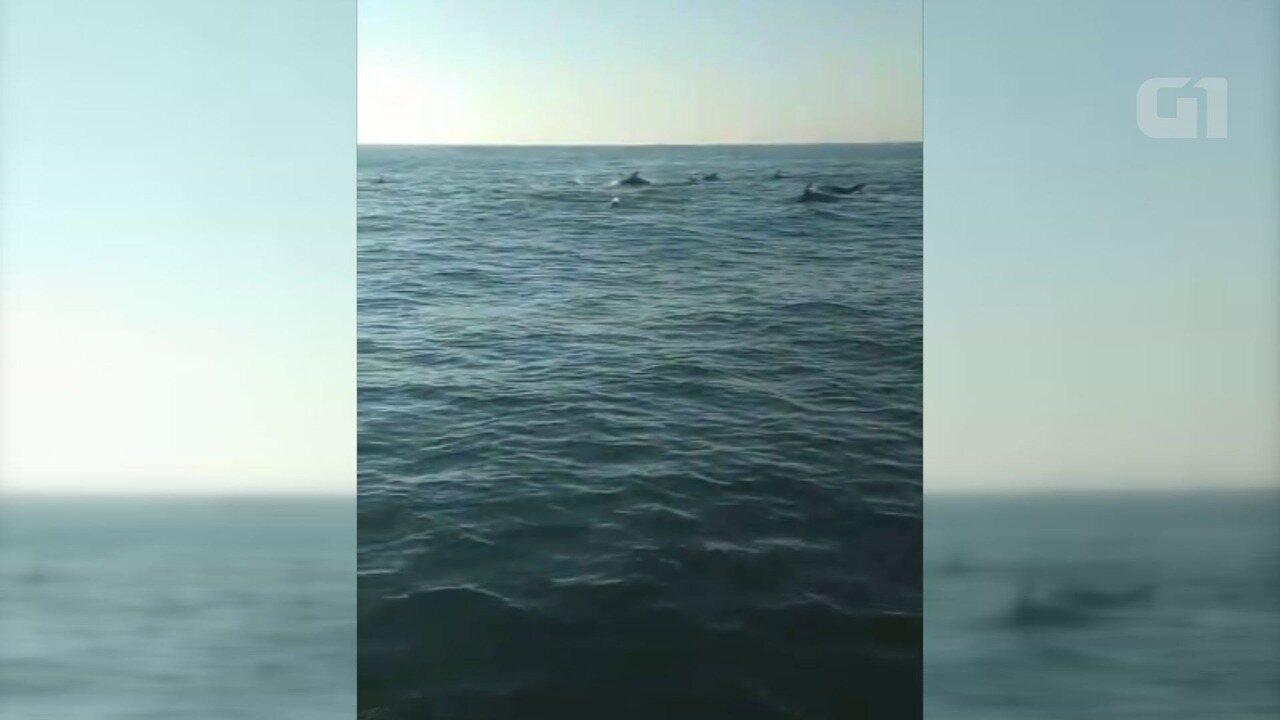 Centenas de golfinhos são flagrados na costa de Praia Grande, SP