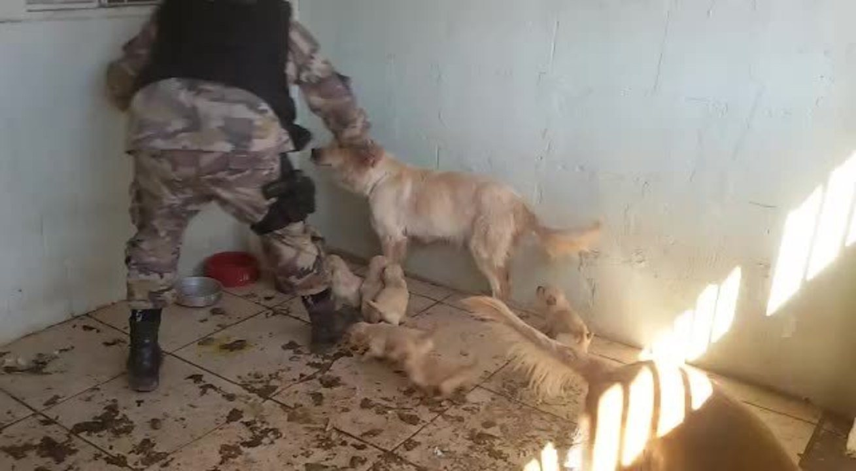 Polícia Militar do DF encontra animais abandonados em casa no Guará I