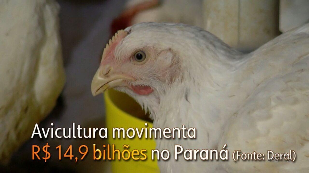 Valor da Roça na suinocultura e avicultura