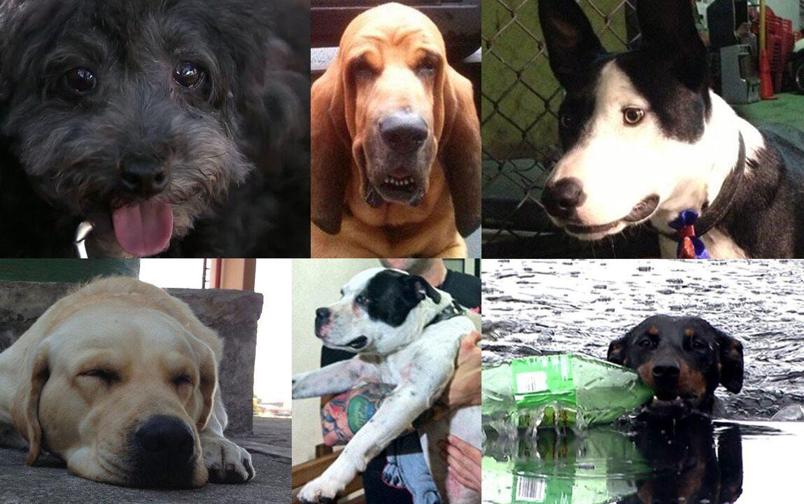 Cachorros viraram notícia em São Paulo