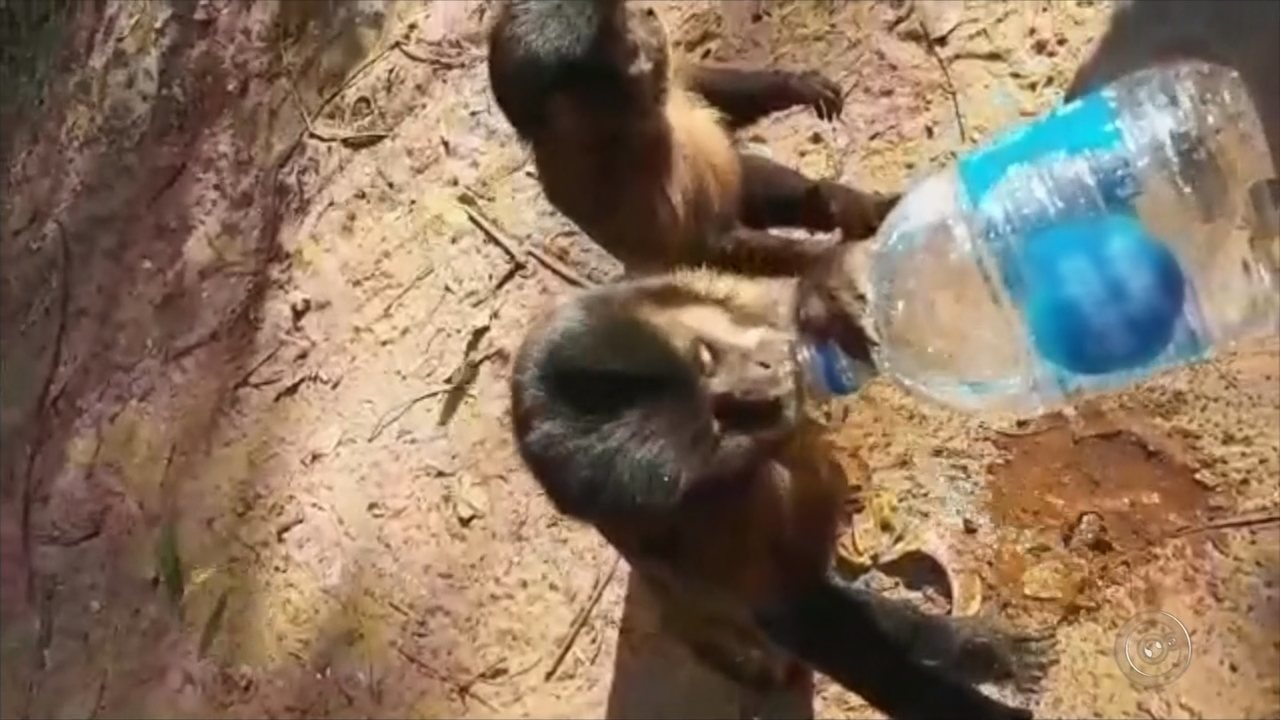Moradores dão água para macacos após incêndio atingir mata onde moram