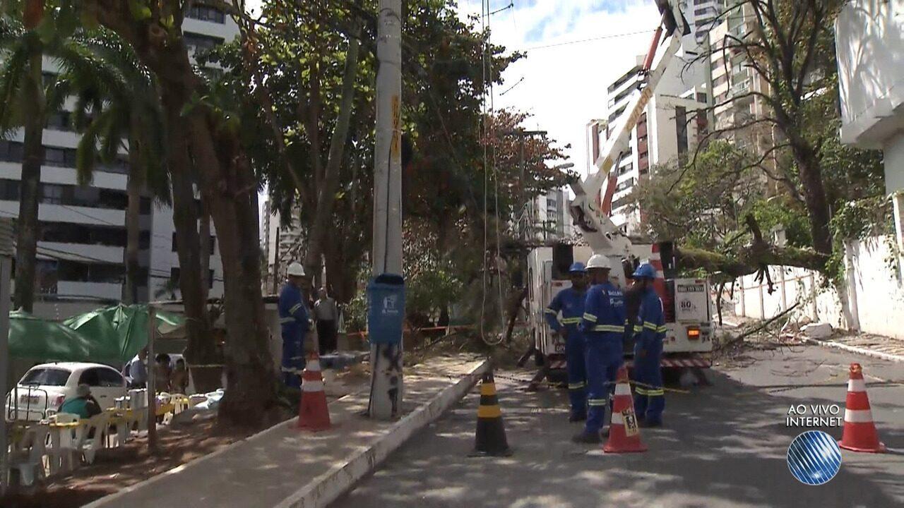 Árvore cai e quebra parte de muro no bairro de Ondina, em Salvador
