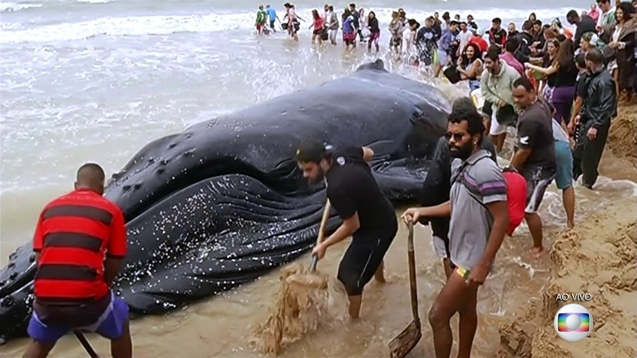 Moradores de Búzios tentam salvar baleia encalhada em praia