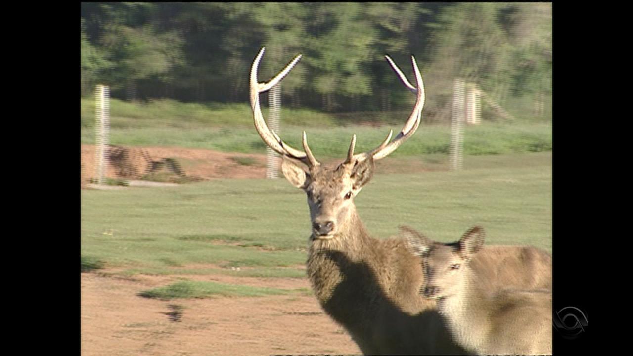 Animais do Pampas Safari são sacrificados por suspeita de contaminação por tuberculose
