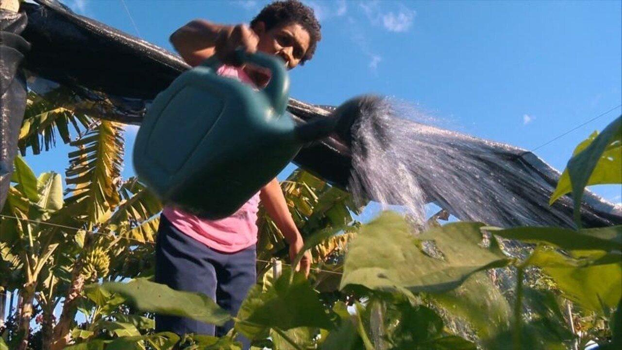 Em Movimento: Agroecologia muda vida de 500 famílias capixabas