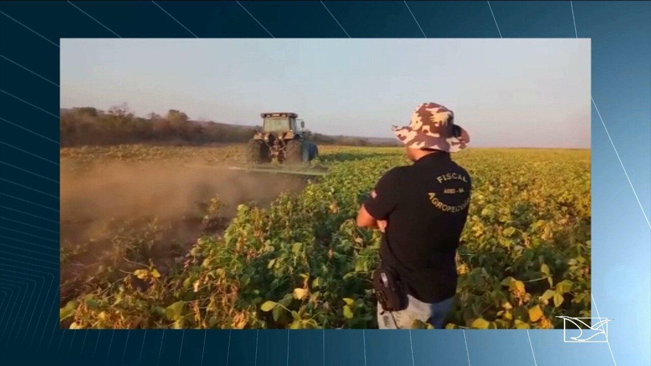 Operação da AGED-MA destrói 174 hectares de lavoura de soja no MA