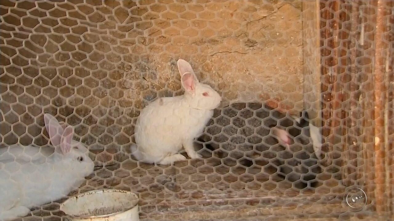 Morador de Marília acumula animais e é acusado de maus-tratos