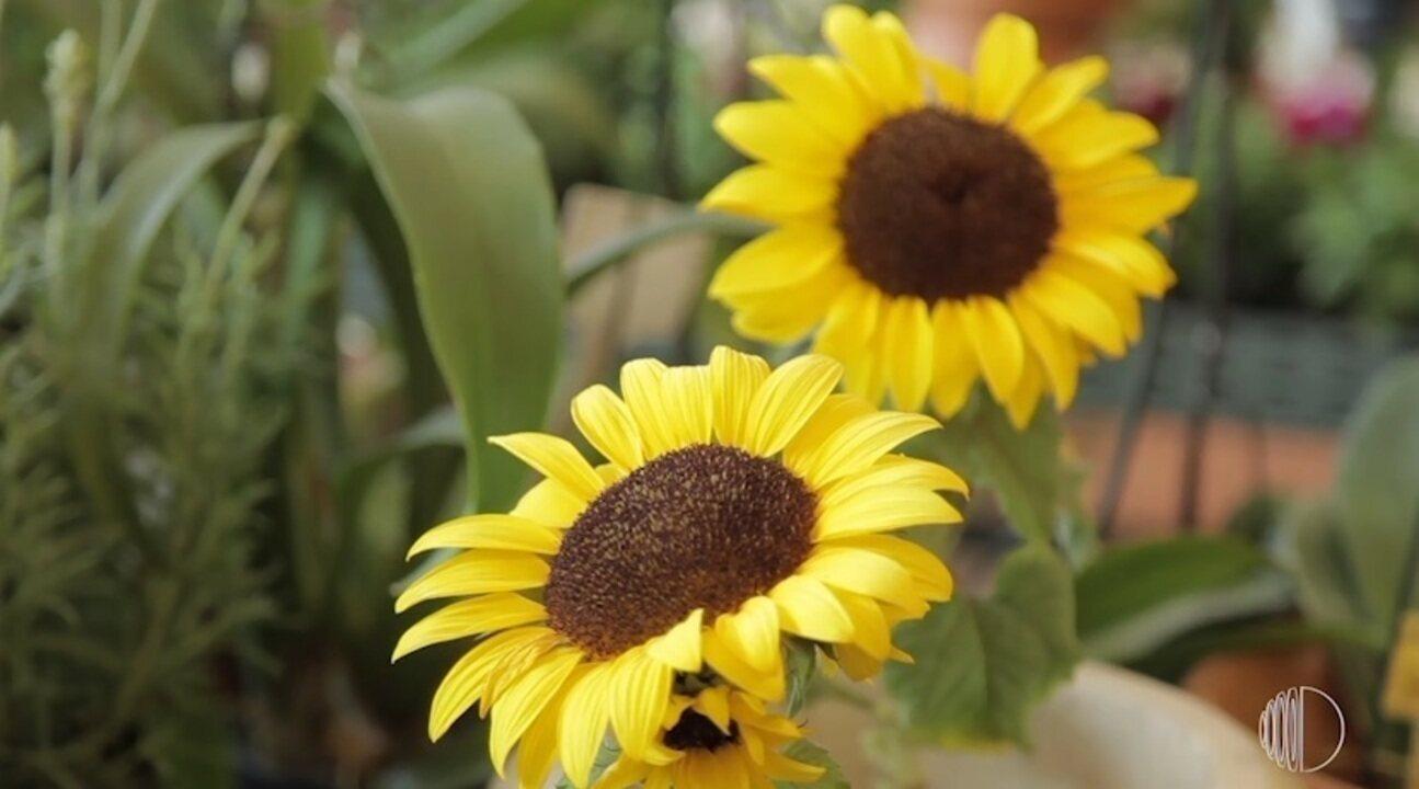 Você sabia que existe o horóscopo das flores? Descubra a sua