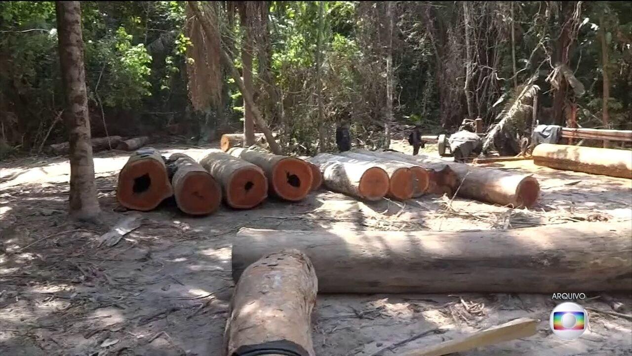 PF desarticula quadrilha suspeita de extrair madeira nobre em terras indígenas