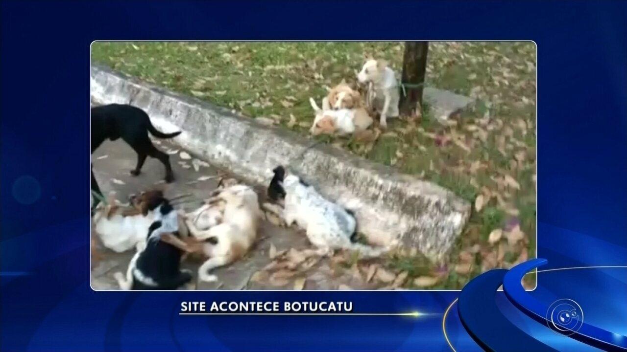 Cães são amarrados em poste e um deles morre enforcado em Botucatu