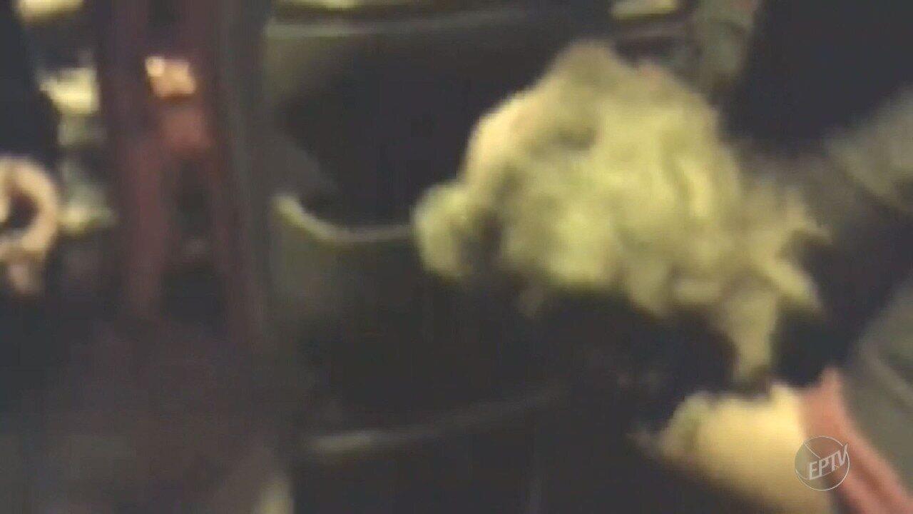 Bombeiro salva cachorro durante incêndio em Jaguariúna