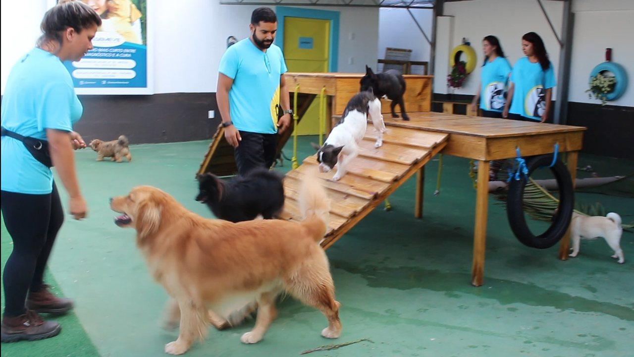 Conheça creche exclusiva para cães que tem piscina, dormitório e salão de festas
