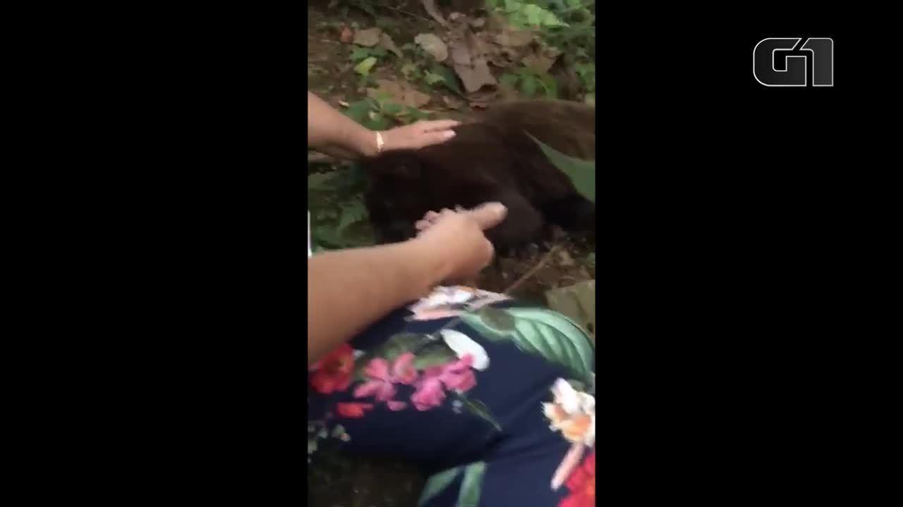 Moradora encontra macaco bugio morto no quintal de casa na Grande SP