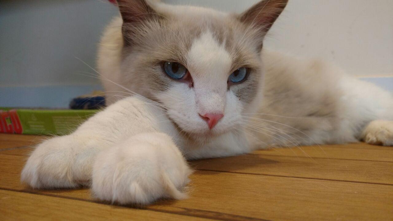 Empresária une paixão por gatos com o ambiente de trabalho