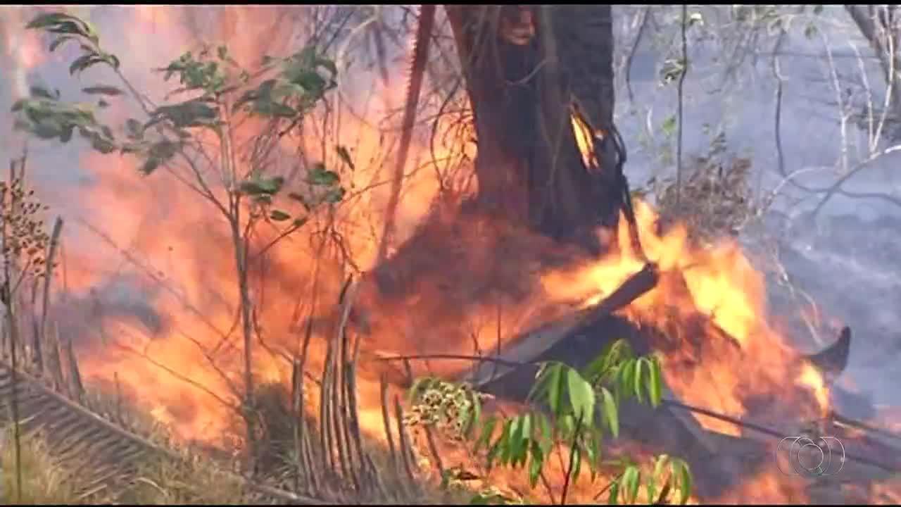 Dois são indiciados por incêndio que destruiu fazendas e matou gado em Carmolândia