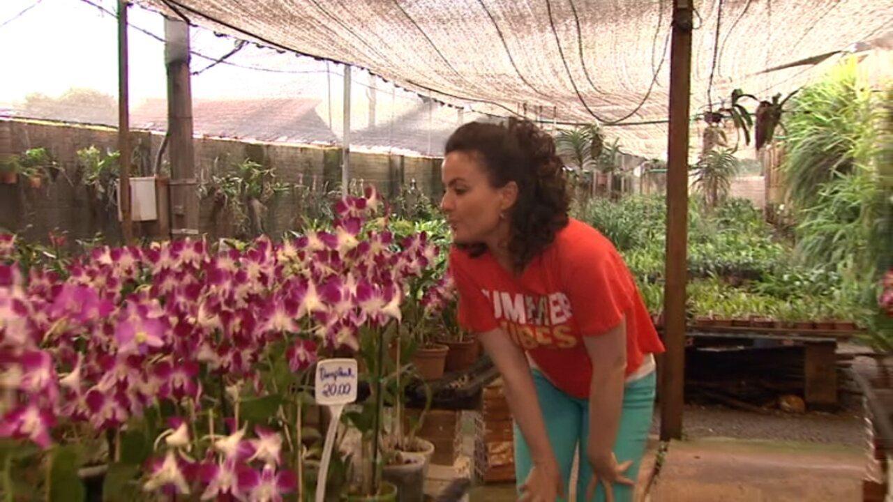 Tratores envenenados e orquídeas (parte 2)