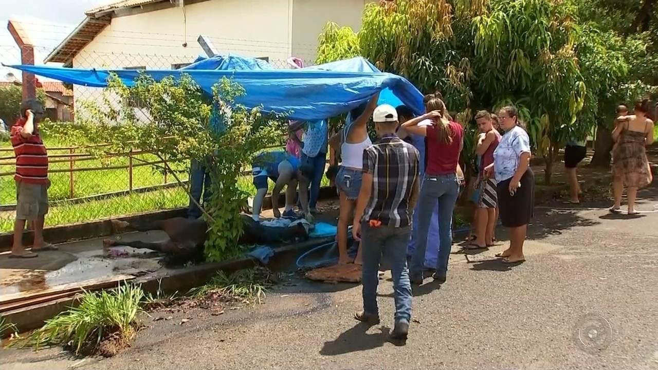 Resgate de égua abandonada em Rio Preto mobiliza moradores