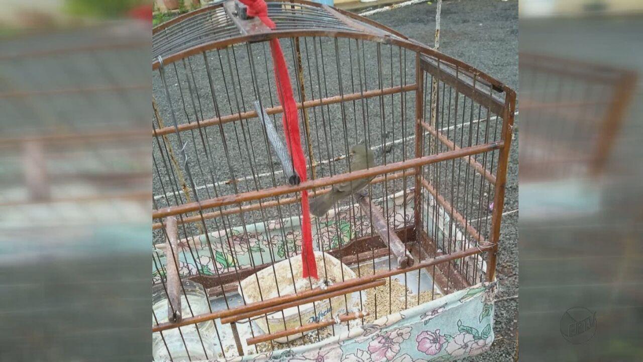 Homem é multado em R$ 3 mil por caça ilegal de pássaros em Pirassununga, SP