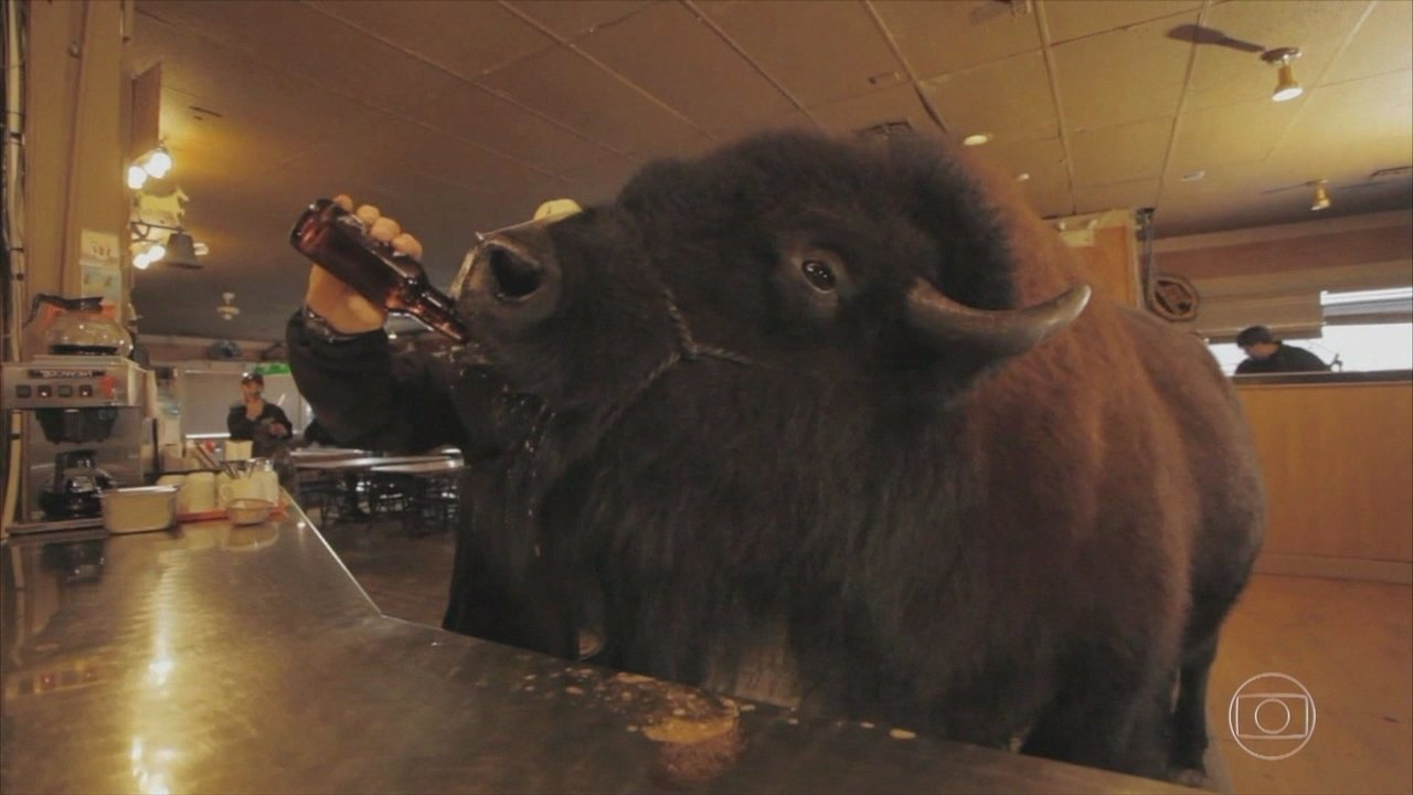 Assista à história do bisão que toma cerveja