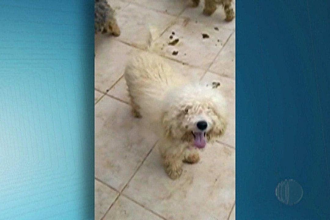 Polícia de Mogi procura responsáveis por abandono de 17 cães em condomínio de alto padrão