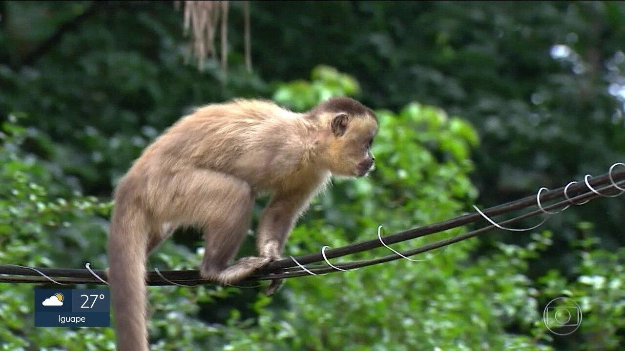 Macacos bugios do Parque do Horto Florestão estão mortos