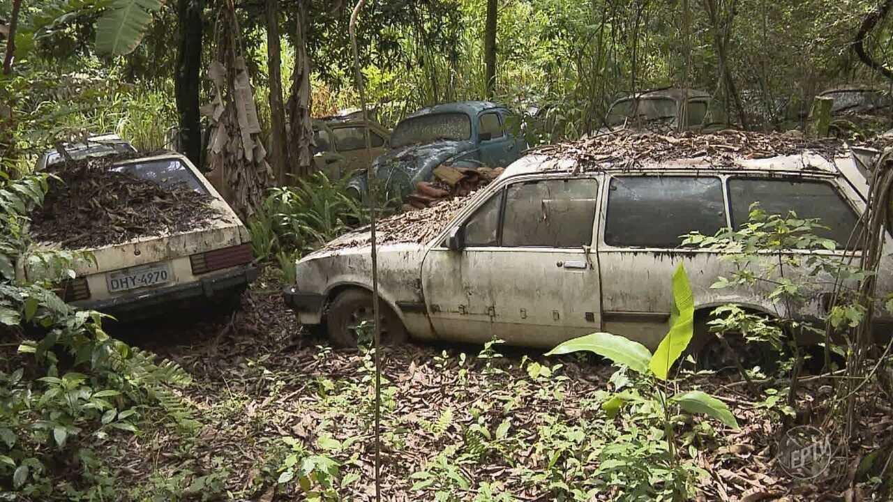 Vigilância Sanitária de Valinhos encontra 350 veículos em chácara